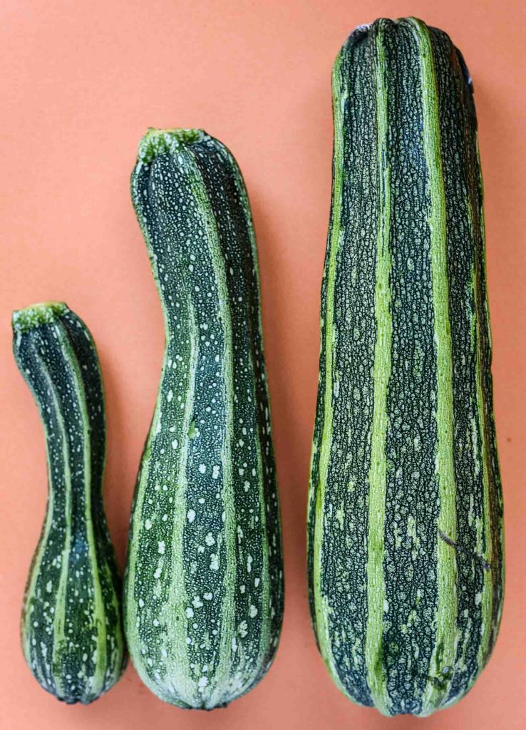 Three giant green zucchinis on an orange background. They are ingredients for vegan zucchini bread,