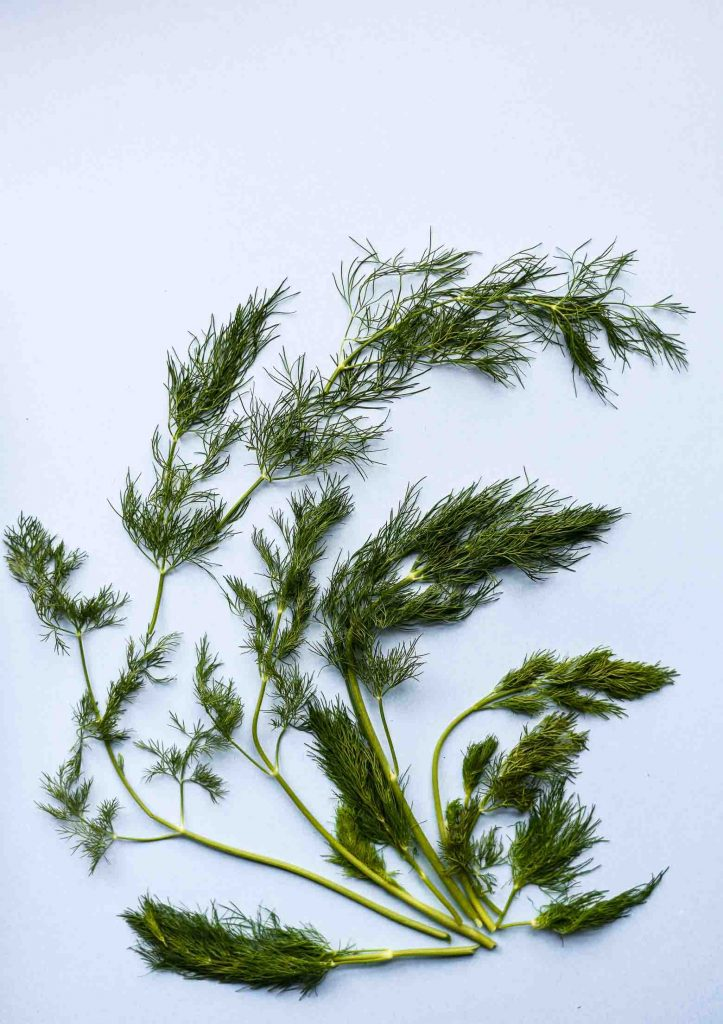 Dill on a blue background for vegan tzatziki