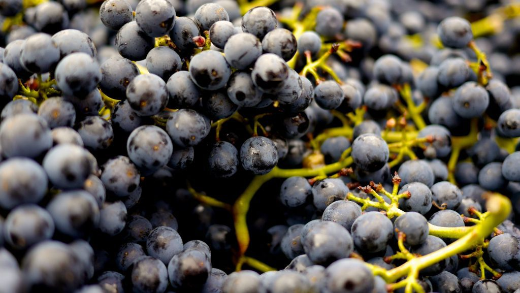 best chilean wine - grapes
